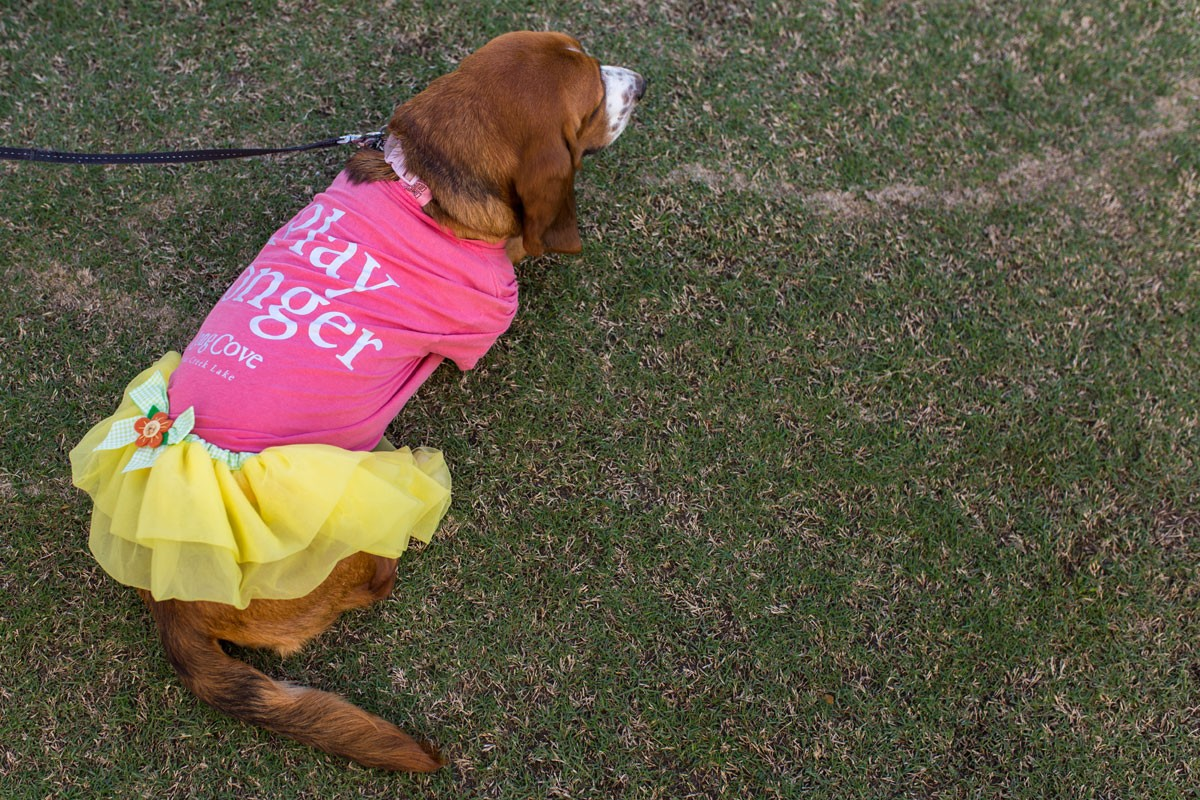 long cove dog modeling lc tshirt and yellow tutu